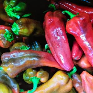 shepherd peppers